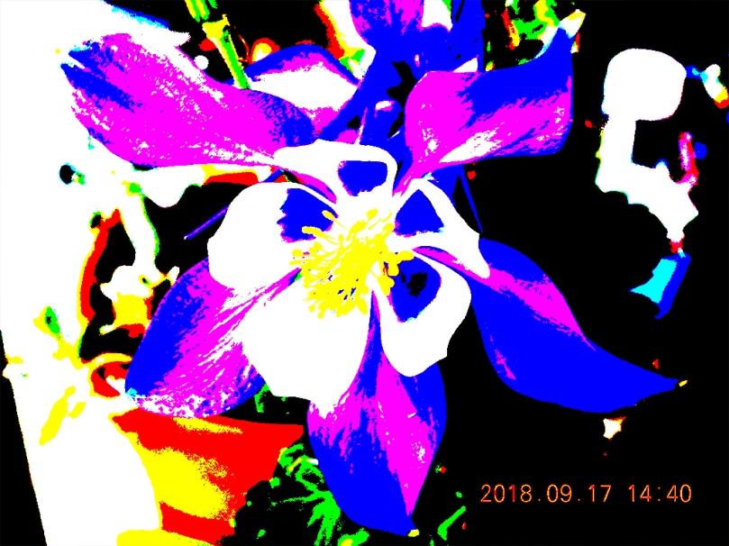 Graphi stylized iris